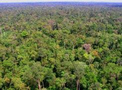 Hutan Harapan