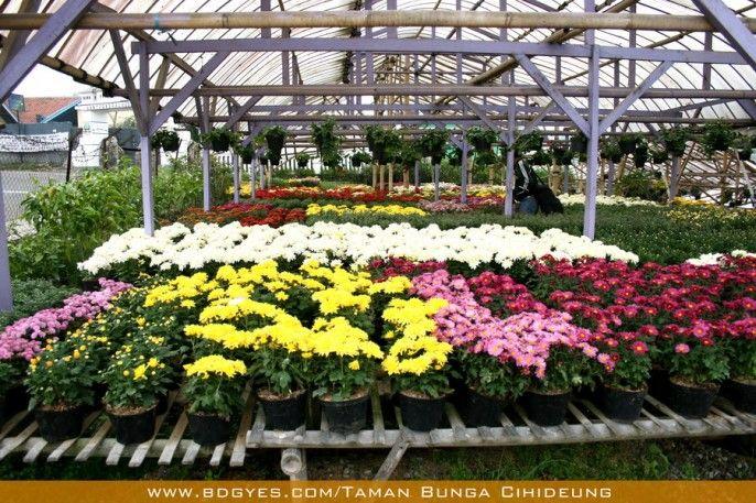 Kawasan Wisata Bunga Cihideung