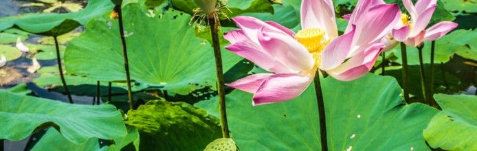 Kebun Raya Bogor