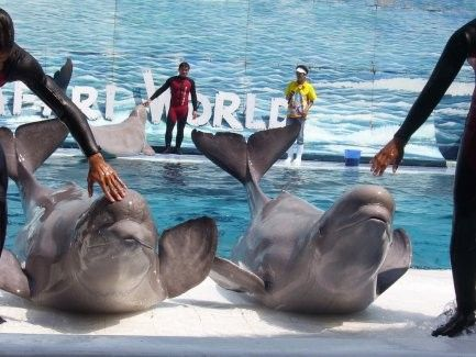 Admission to Safari World with lunch and transfers
