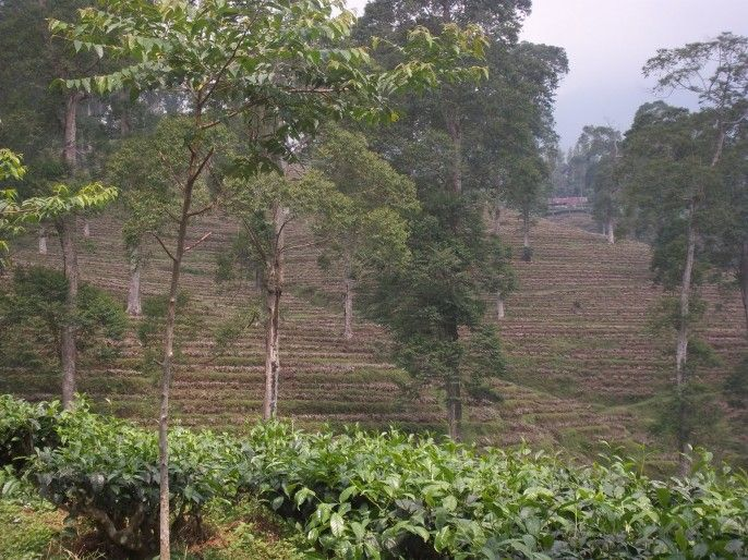 Hutan Wisata Curug Genting