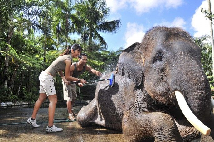 harga tiket Bali Elephant Bathe and Breakfast (BB)