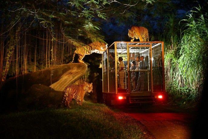 harga tiket Bali Night Safari Admission - Indonesia Citizen Rate