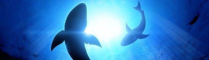 harga tiket Bali Swim with Sharks