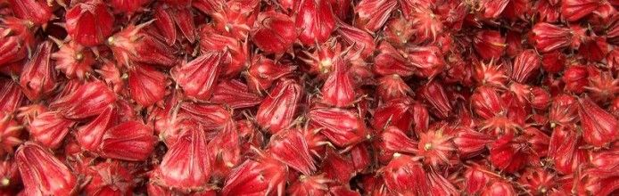 Condido Agro Herbal