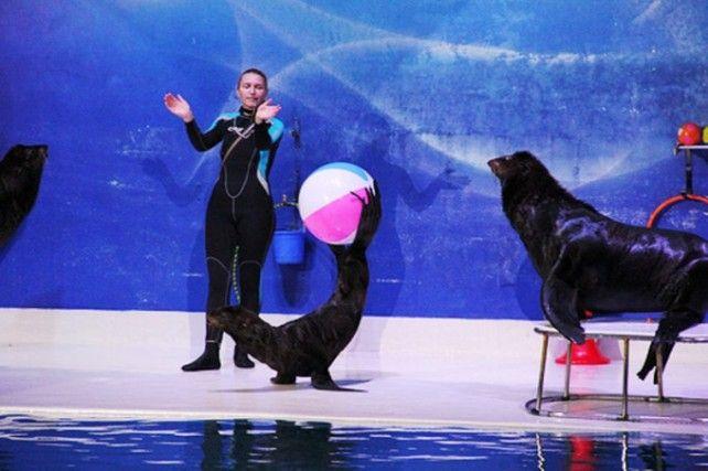Dolphin and Seal Show at Dubai Dolphinarium