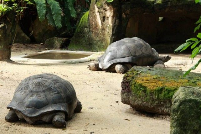 Half-day Guided National Zoo Malaysia Tour