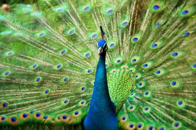 harga tiket Kuala Lumpur Bird Park, Butterfly Park and Orchid Garden Tour