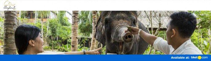 harga tiket Lombok Elephant Park