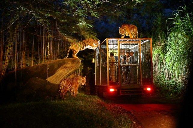 Night Safari E-voucher