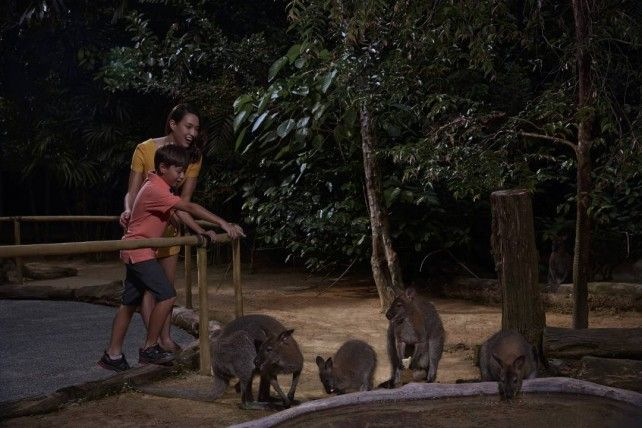 Night Safari Fixed date Admission with English Tram Ride