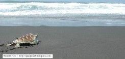 Pantai Sindang Kerta
