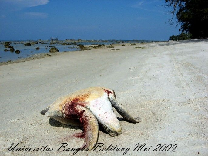 Pantai Tanjung Labu