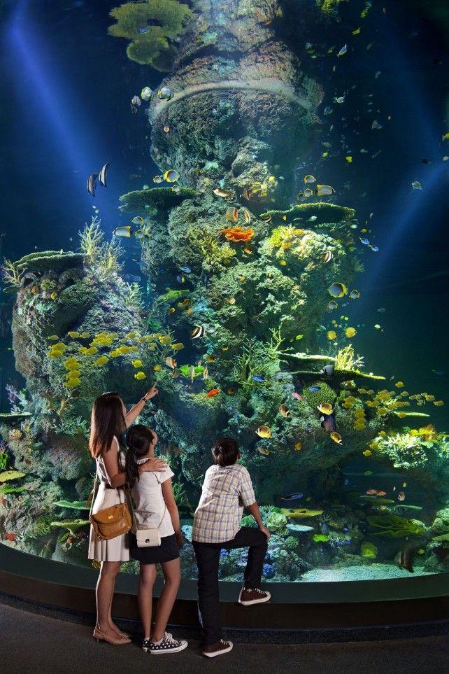 S.E.A. Aquarium Admission with One-way Transfer