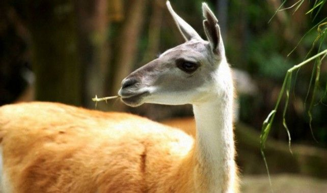Singapore Zoo Admission with Unlimited Tram Ride