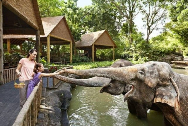 Singapore Zoo and River Safari Combo with Two-way Transfer
